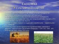 Економіка Сільське господарство Р о с л и н н и ц т в о В економіці району пр...