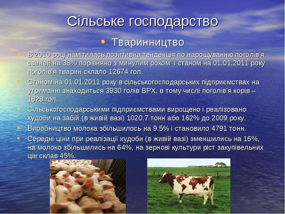 Сільське господарство Тваринництво В 2010 році намітилась позитивна тенденція...