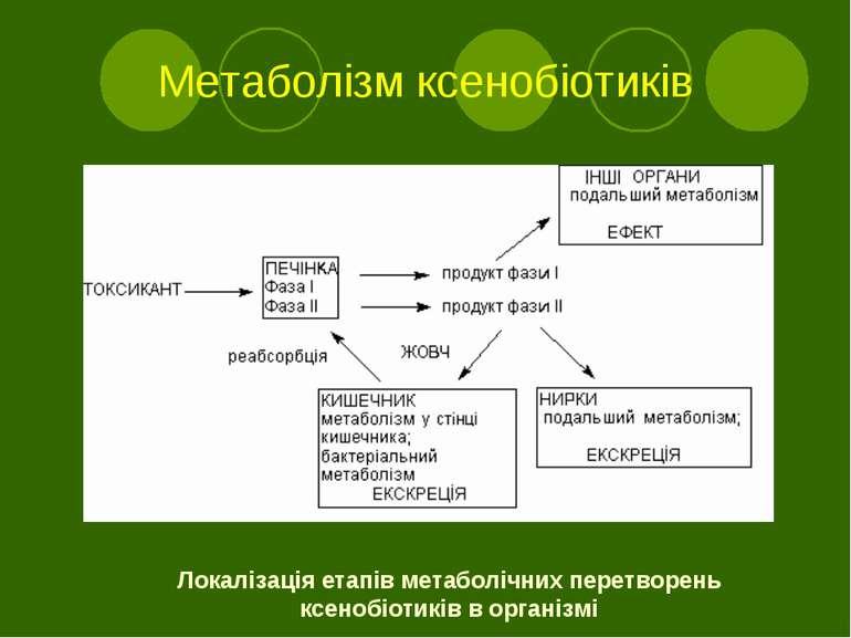 Метаболізм ксенобіотиків Локалізація етапів метаболічних перетворень ксенобіо...