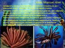 Клас Морські лілеї нагадують квіти, з променями, що сильно гілкуються, рот і ...