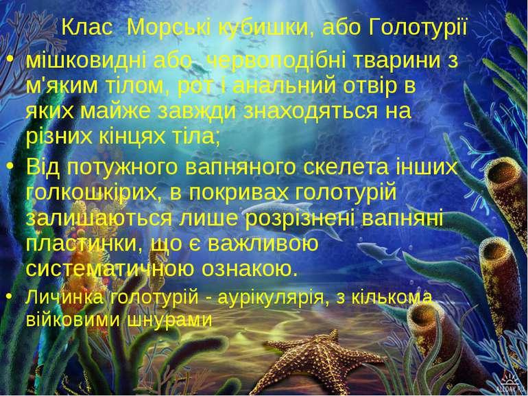 Клас Морські кубишки, або Голотурії мішковидні або червоподібні тварини з м'я...