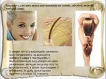 Їх секрет містить жироподібні речовини. Вони потрапляють на волосся та поверх...