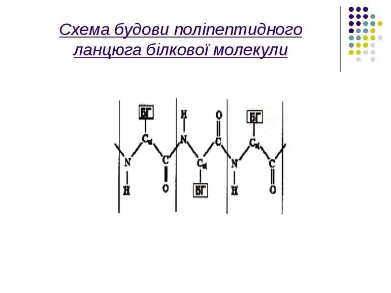 Схема будови поліпептидного ланцюга білкової молекули