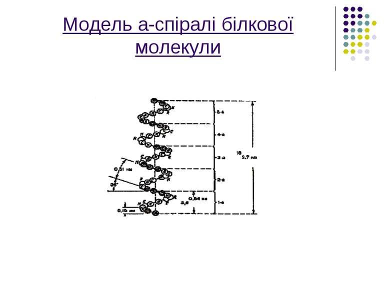 Модель а-спіралі білкової молекули