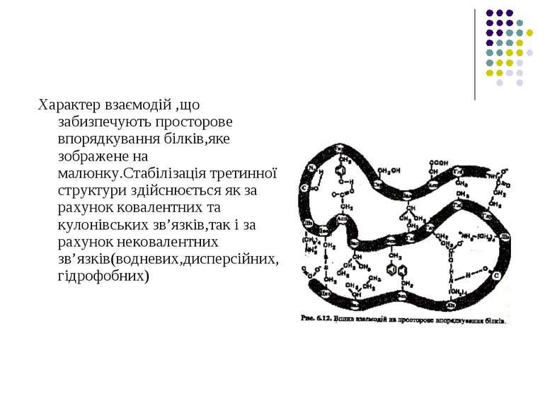 Характер взаємодій ,що забизпечують просторове впорядкування білків,яке зобра...