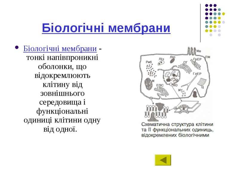 Біологічні мембрани Біологічні мембрани - тонкі напівпроникні оболонки, що ві...