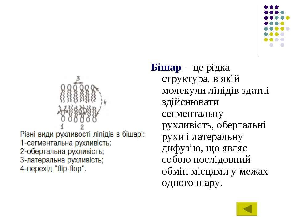 Бішар - це рідка структура, в якій молекули ліпідів здатні здійснювати сегмен...