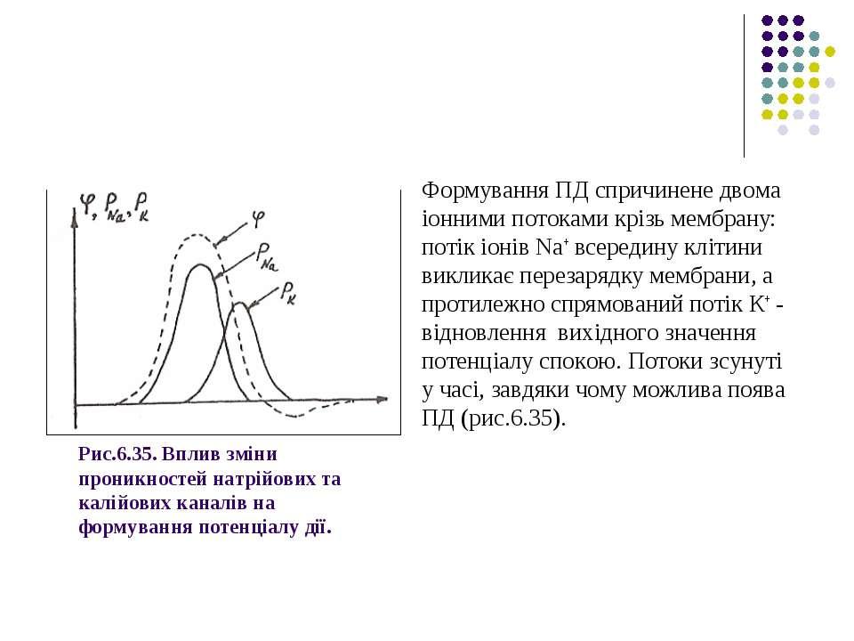 Рис.6.35. Вплив зміни проникностей натрійових та калійових каналів на формува...