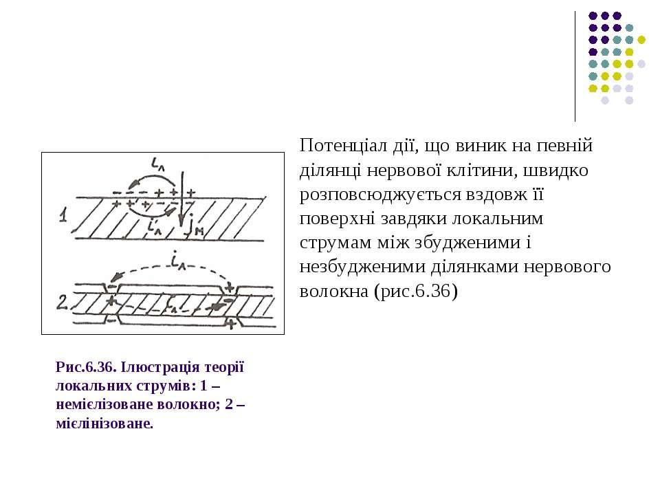 Рис.6.36. Ілюстрація теорії локальних струмів: 1 – немієлізоване волокно; 2 –...