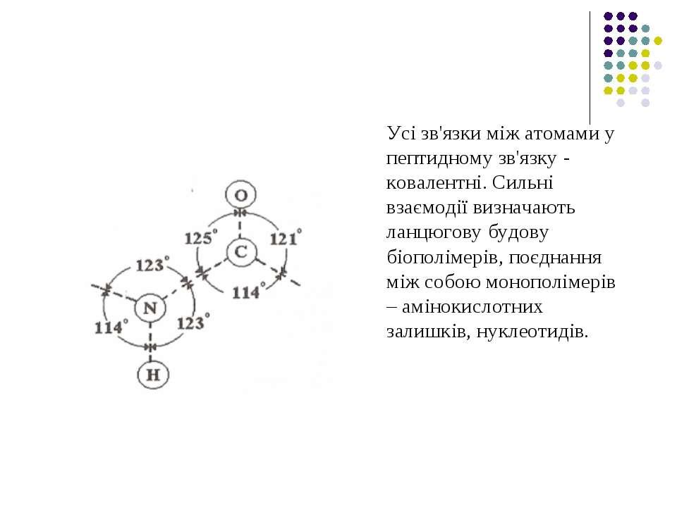Усі зв'язки між атомами у пептидному зв'язку - ковалентні. Сильні взаємодії в...