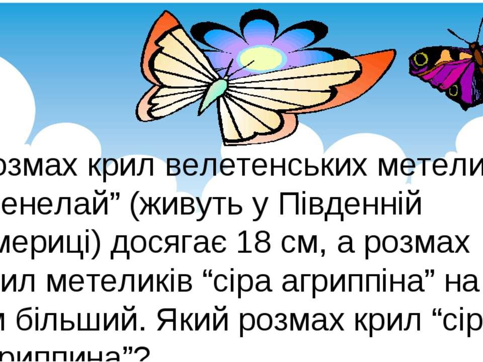 """Розмах крил велетенських метеликів """"менелай"""" (живуть у Південній Америці) дос..."""