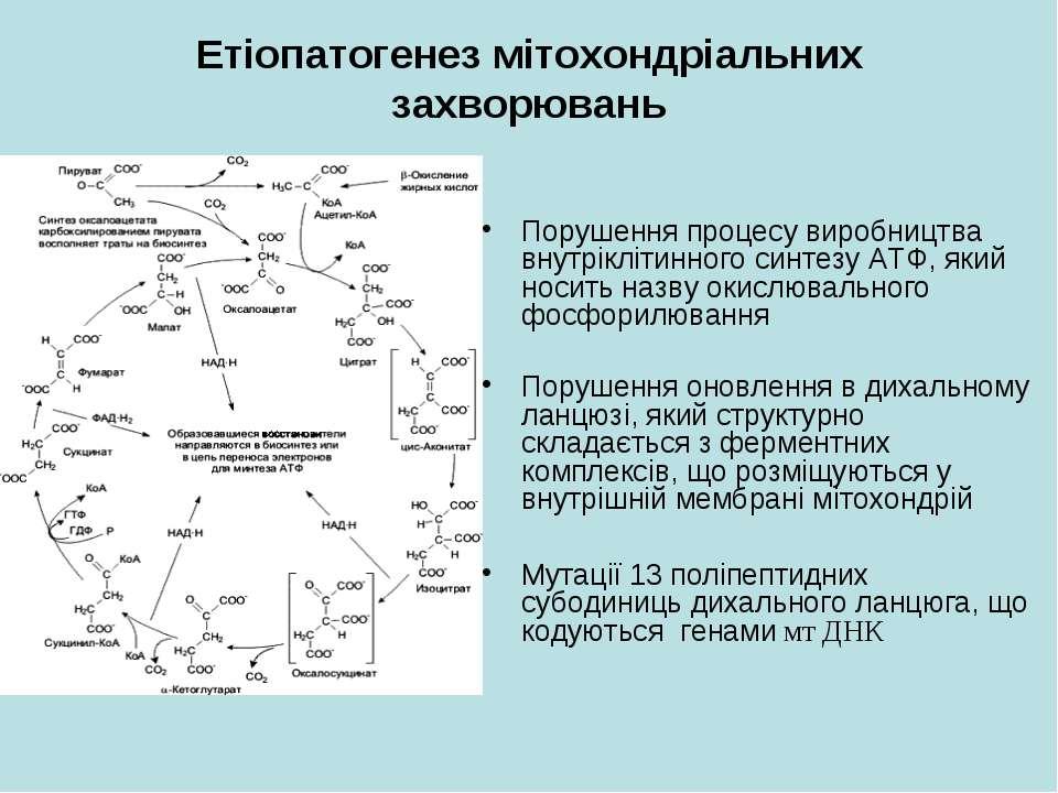 Етіопатогенез мітохондріальних захворювань Порушення процесу виробництва внут...