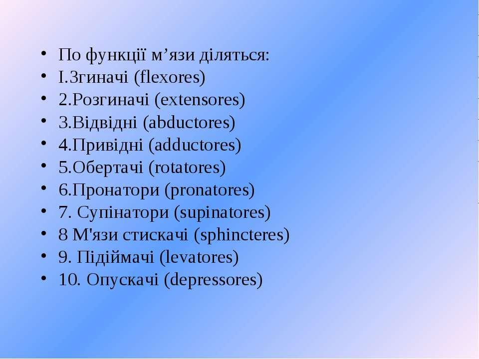 По функції м'язи діляться: І.Згиначі (flexores) 2.Розгиначі (extensores) 3.Ві...