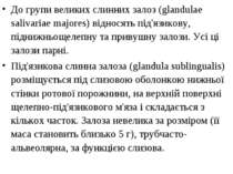 До групи великих слинних залоз (glandulae salivariae majores) відносять під'я...