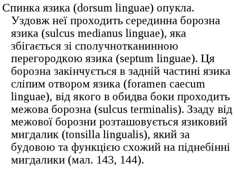 Спинка язика (dorsum linguae) опукла. Уздовж неї проходить серединна борозна ...