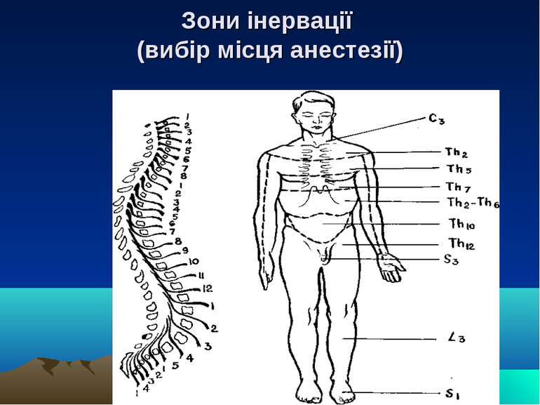 Зони інервації (вибір місця анестезії)