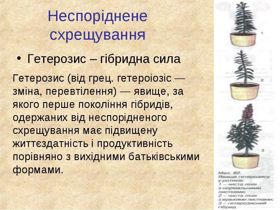 Неспоріднене схрещування Гетерозис – гібридна сила Гетерозис (від грец. гетер...
