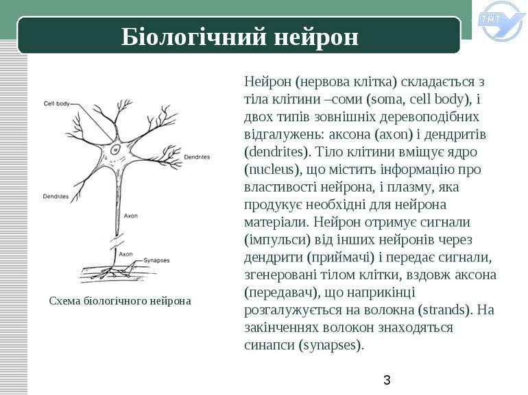 Біологічний нейрон Нейрон (нервова клітка) складається з тіла клітини –соми (...