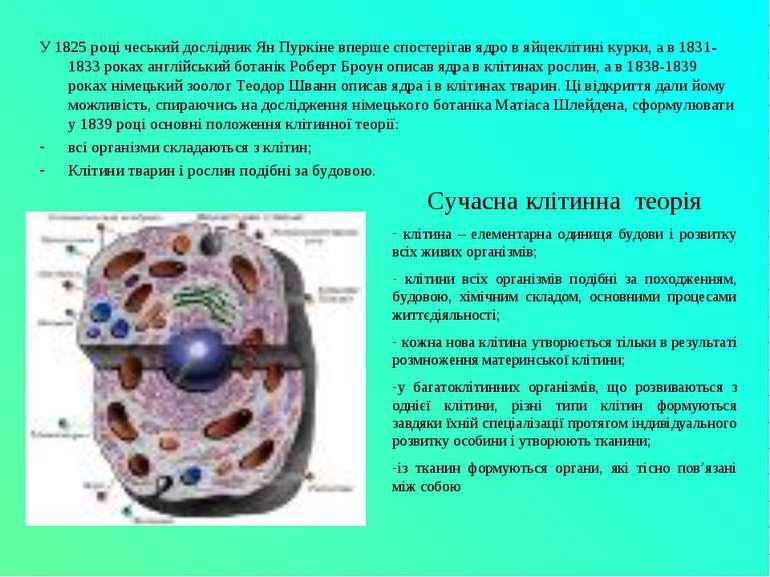 У 1825 році чеський дослідник Ян Пуркіне вперше спостерігав ядро в яйцеклітин...