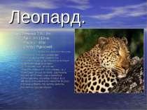Леопард. Довжина:0,9-1,9м. Хвіст:60-110см. Маса:37-90кг. Статус:Рідкісний. Не...