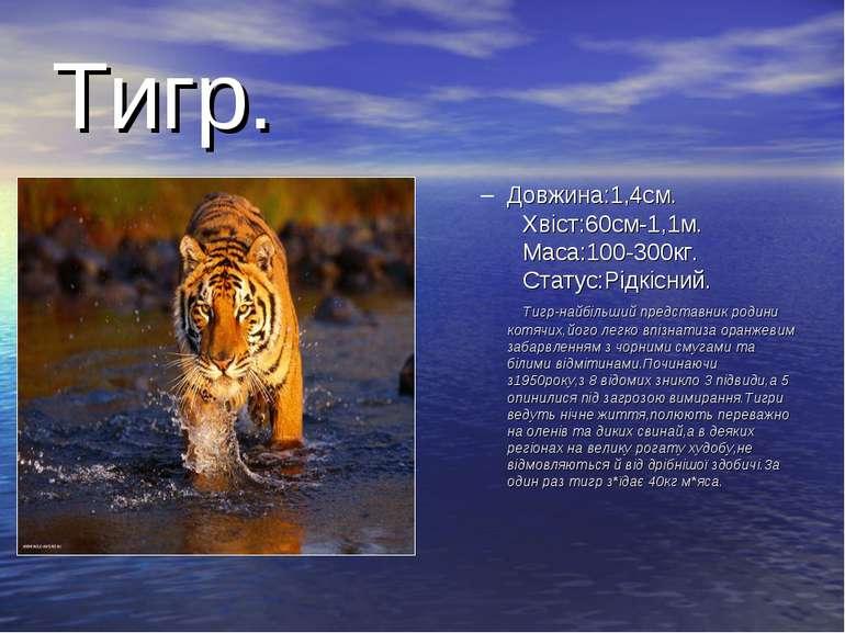 Тигр. Довжина:1,4см. Хвіст:60см-1,1м. Маса:100-300кг. Статус:Рідкісний. Тигр-...