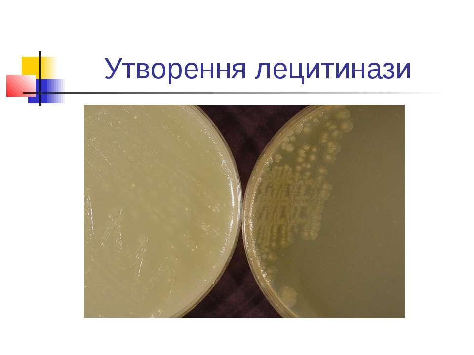 Утворення лецитинази
