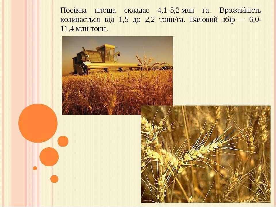 Посівна площа складає 4,1-5,2млн га. Врожайність коливається від 1,5 до 2,2 ...