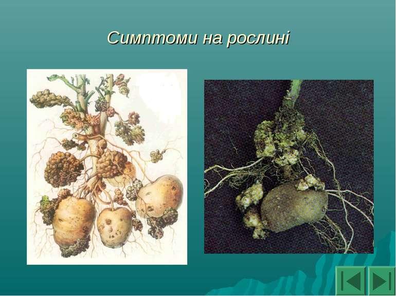 Симптоми на рослині
