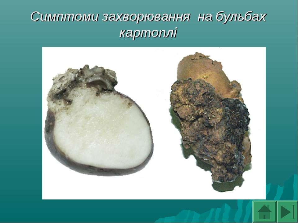 Симптоми захворювання на бульбах картоплі