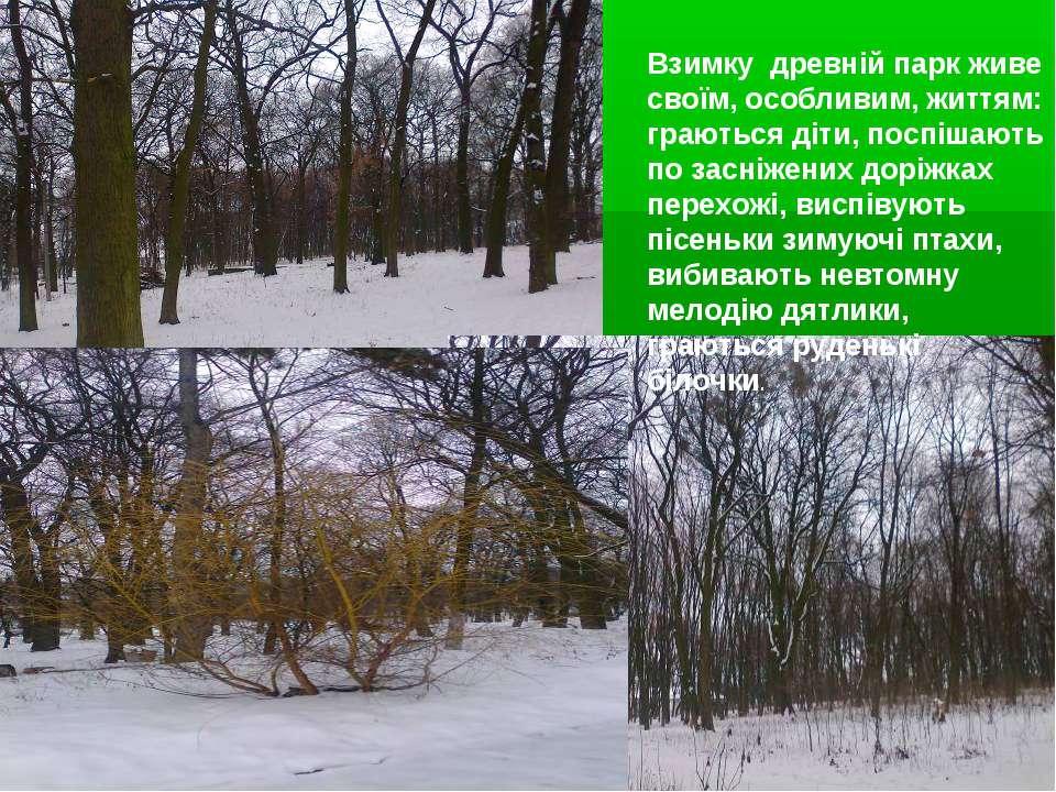 Взимку древній парк живе своїм, особливим, життям: граються діти, поспішають ...