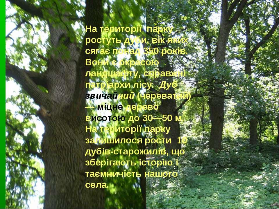 На території парку ростуть дуби, вік яких сягає понад 350 років. Вони є окрас...