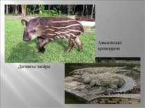 Амазонські крокодили Дитинча тапіра