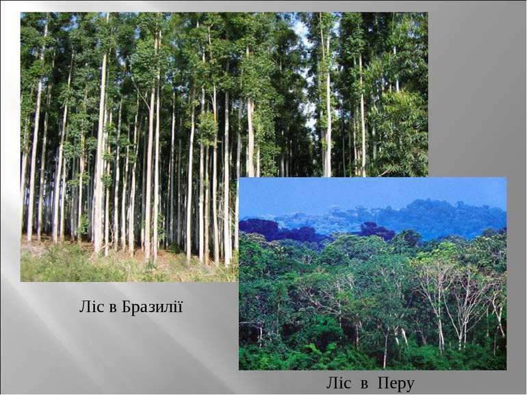 Ліс в Бразилії
