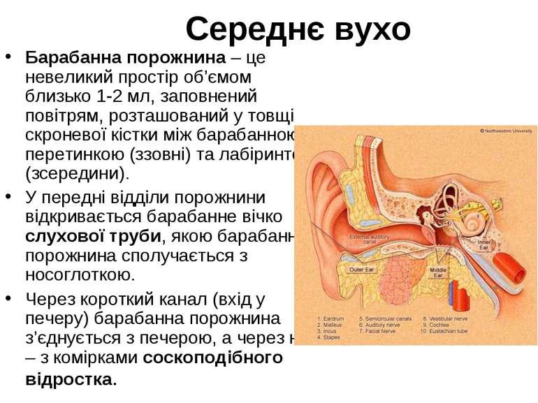 Середнє вухо Барабанна порожнина – це невеликий простір об'ємом близько 1-2 м...