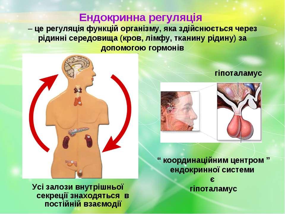Ендокринна регуляція – це регуляція функцій організму, яка здійснюється через...