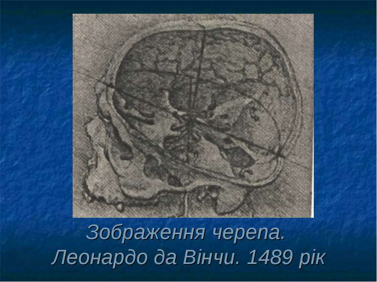 Зображення черепа. Леонардо да Вінчи. 1489 рік