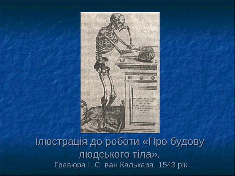 Ілюстрація до роботи «Про будову людського тіла». Гравюра І. С. ван Калькара....