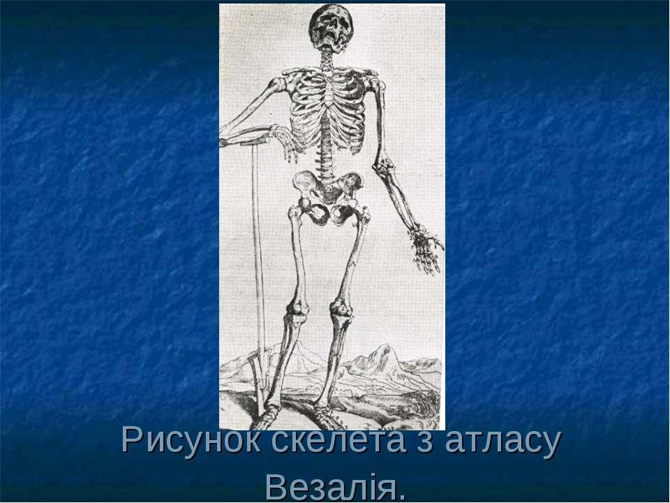 Рисунок скелета з атласу Везалія.