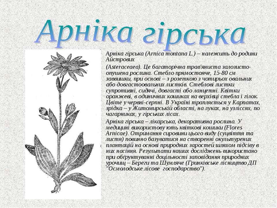 Арніка гірська (Arnica montana L.) – належить до родини Айстрових (Asteraceae...