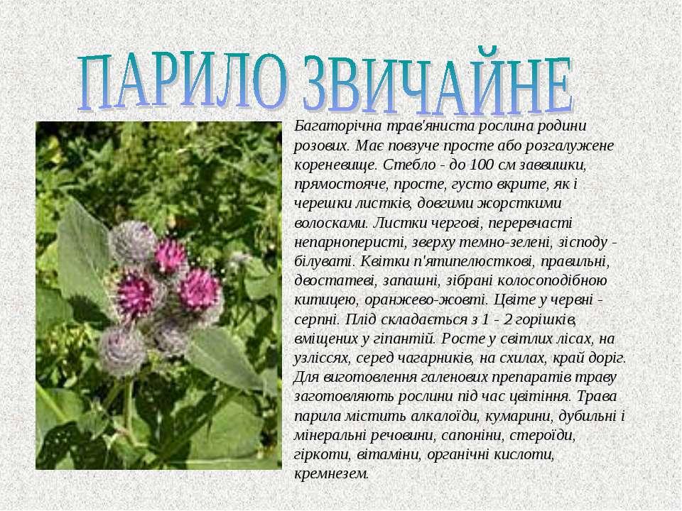 Багаторiчна трав'яниста рослина родини розових. Має повзуче просте або розгал...