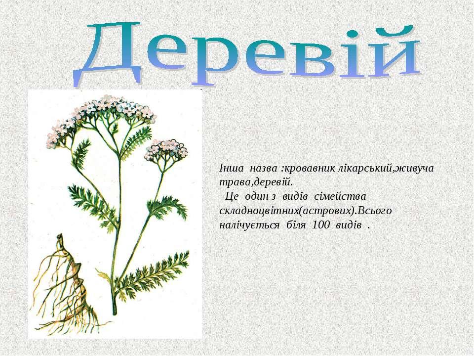 Інша назва :кровавник лікарський,живуча трава,деревій. Це один з видів сімейс...