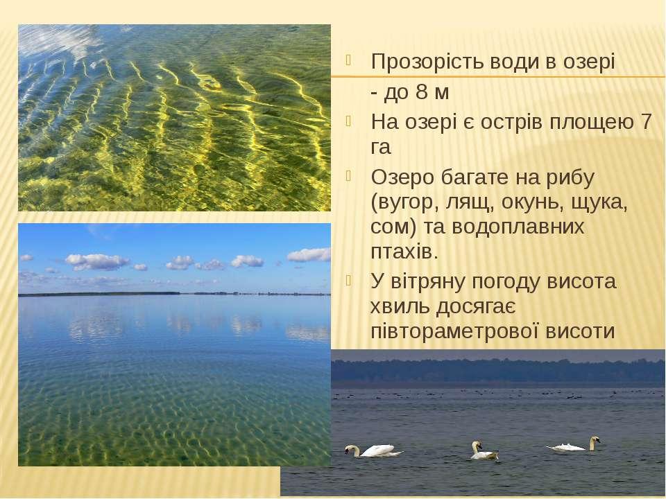 Прозорість води в озері - до 8 м На озері є острів площею 7 га Озеро багате н...