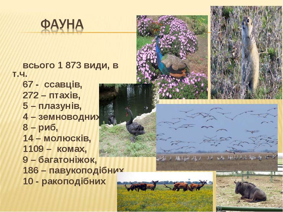 всього 1 873 види, в т.ч. 67 - ссавців, 272 – птахів, 5 – плазунів, 4 – земно...