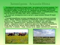 Заповідник Асканія-Нова Асканія-Нова - державний заповідник на півдні України...