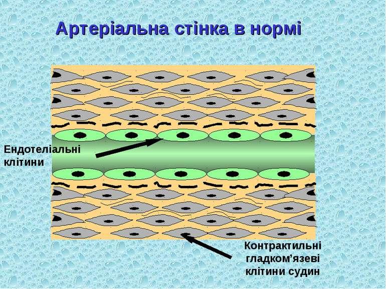 Артеріальна стінка в нормі Ендотеліальні клітини Контрактильні гладком'язеві ...