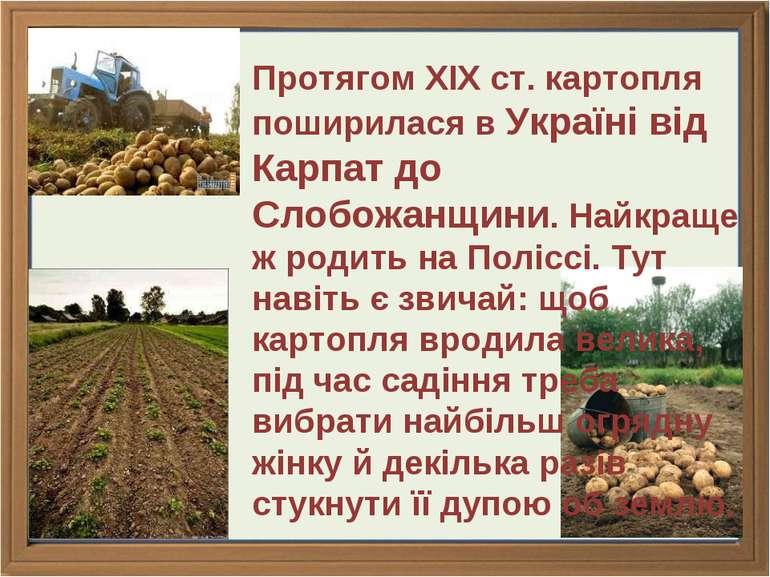 Протягом ХІХ ст. картопля поширилася в Україні від Карпат до Слобожанщини. На...