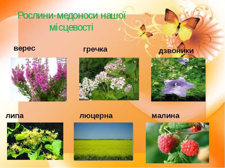 Рослини-медоноси нашої місцевості верес гречка дзвоники липа люцерна малина
