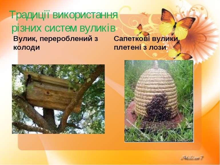 Традиції використання різних систем вуликів Вулик, перероблений з колоди Сапе...