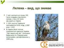 Лелека – вид, що зникає У світі налічується понад 160 тисяч гніздових пар біл...