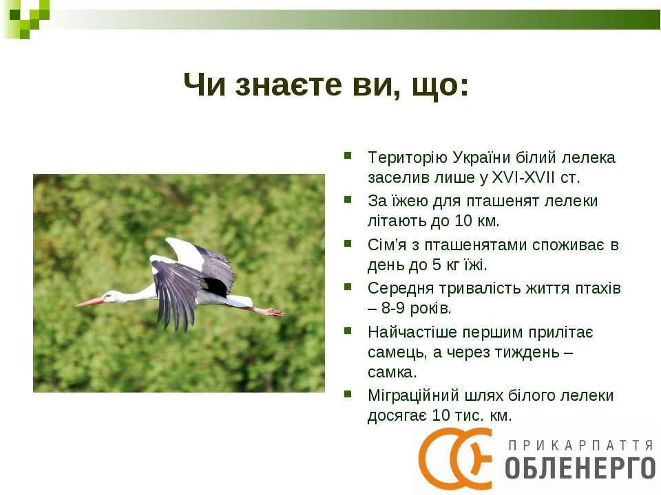 Чи знаєте ви, що: Територію України білий лелека заселив лише у XVI-XVII ст. ...